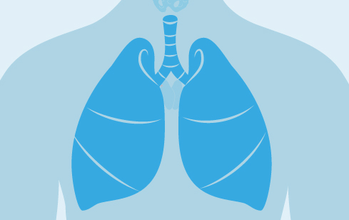 Lungs graphic